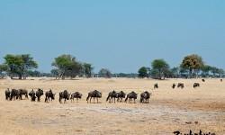 Gửi hàng hóa,chứng từ chuyển phát nhanh đi Zimbabwe